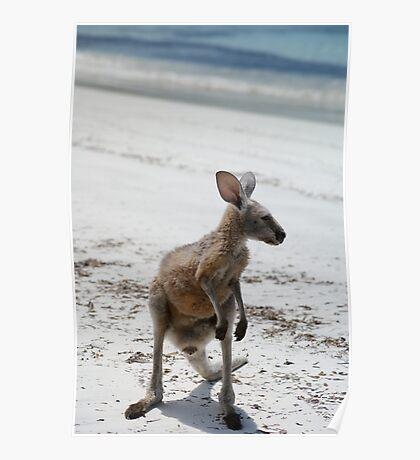 Beach Baby Kangaroo Poster