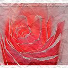 Creased rose by Heike Schenk Arena