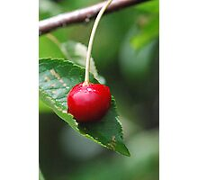 The Cherry And The Leaf Photographic Print