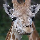 Giraffe by wilsonsz