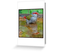 Red-Browed Firetail Greeting Card
