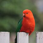Sitting on the Fence by smallan