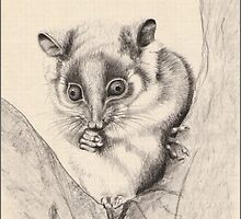 Possum in Fork of Tree by Louise Page