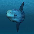 Mola Mola (Ocean Sunfish) by Walter Colvin