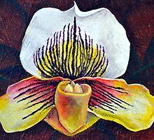 Orchid Arc by Amanda Christine Shelton