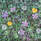 'Dandelions & Clover (Ground Cover #2)' by Jerry Kirk