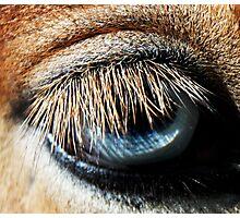 lashes of lashes Photographic Print