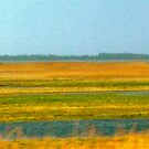 Yellowfields of Denmark   by Jan  Postel