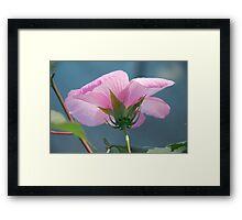 Beautiful Hibiscus 2 Framed Print