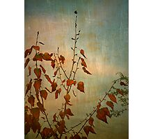 The Small Pieces of Autumn Photographic Print