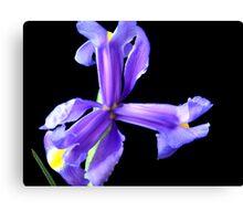 Wonderful flower. Canvas Print