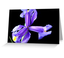 Wonderful flower. Greeting Card