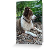 This is Buddy...who came to stay Greeting Card