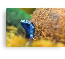 Leaving home - Blue Frog Canvas Print