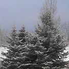 1st snowfall- Dec 1st 2009 by Tracy Wazny
