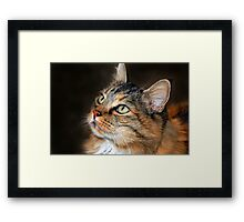 C C the Maine Coon Framed Print