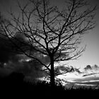 Black and White Tree by Alice Oates