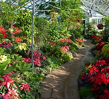 Allan Gardens Christmas Festival I by Marilyn Cornwell