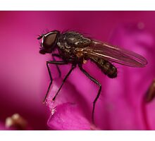 Fly Macro Photographic Print