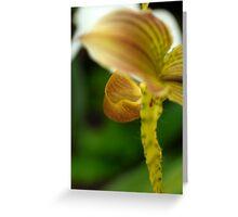Orchid 3 - San Francisco, CA Greeting Card