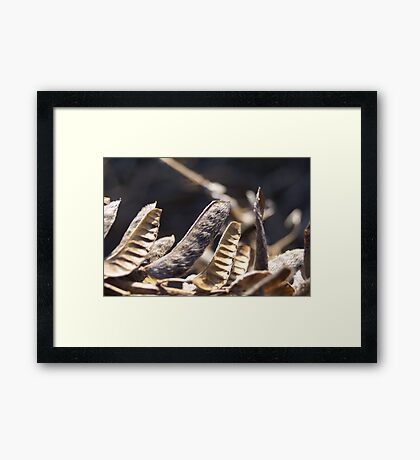 Lupin pods Framed Print