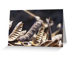 Lupin pods Greeting Card
