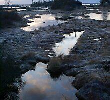 Saltmarsh morning by Jean Knowles