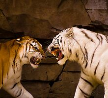 Tigers by James Rutherford