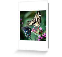 Giant Swallowtail Papilio Cresphontes Greeting Card