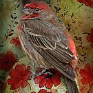 Fancy Finch by Bonnie T.  Barry