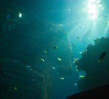 Big Aquarium - Sealife Munich by Melanie PATRICK