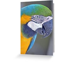 Blue & Gold Macaw Greeting Card