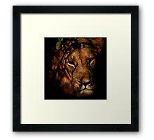 Masai Mara Lion Framed Print