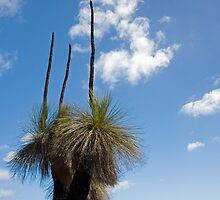 Australian Native Grass Tree by sallydexter