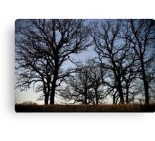 Perfect Oak Canvas Print