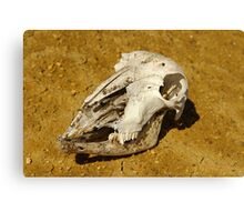 Animal Skull In Desert Canvas Print