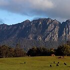 Mt Rollan .Tas by Norman Winkworth