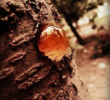 cherry tree's nipple by schizomania