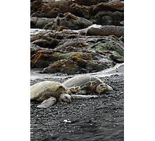 Hawksbill Sea Turtle - Kona, HI Photographic Print