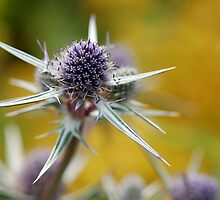 Sea Holly by Denise Couturier