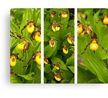 Ontario Orchids Canvas Print