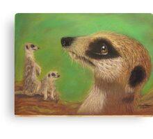 Meerkat Abeline Canvas Print
