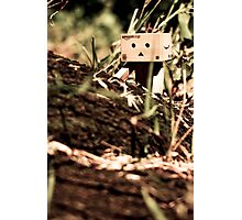 Danbo - Bush Walk Photographic Print