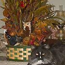 Pyewacket Enjoyed Thanksgiving by Memaa