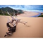 Interview River, sculptured wood by Scott Kennedy by Tarkine Trails Tasmania