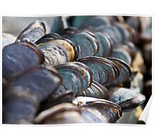 Sea Coloured Mussels Poster