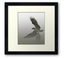 Osprey Lift Off in Maine Framed Print