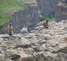 Marmot Family by wrsllc