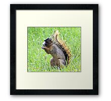 Tails Up Framed Print