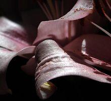 Gentle Chords  by Lozzar Flowers & Art